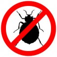 Rental Bug Problems